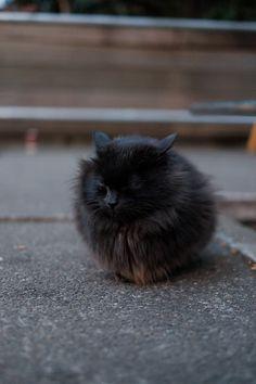 cold kitty - brrrr - brrr - brrrrrrrrrrrrrrrrrrrrrrr