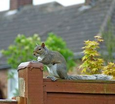 If you are not sure as to why you should use squirrel repellent at all, then this website is specially written for you.