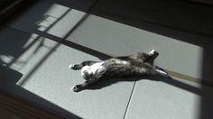 catsdogsgifs:http://catsdogsgifs.tu... http://highlandvalley.tumblr.com/post/148490745058/catsdogsgifs-httpcatsdogsgifstumblrcom by https://j.mp/Tumbletail