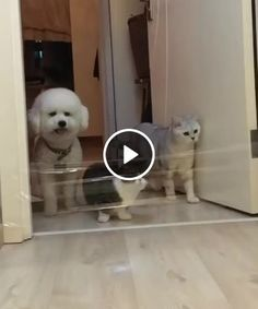 Funny cats compilation 2016 Best funny cat videos ever by Funny Vines.Hope you like a new funny cat videos compilation funny cats and silly cats . Cute Funny Animals, Funny Animal Pictures, Cute Baby Animals, Funny Dogs, Animals And Pets, Cute Cats, Funny Animal Gifs, Dumb Dogs, Funny Cat Compilation