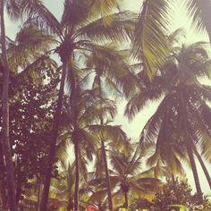 Palm three / Summer Holidays / Caraibi / Santo Domingo / Hola Amigòs / Mucho Gusto