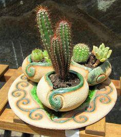 macetas para cactus. crasas y suculentas