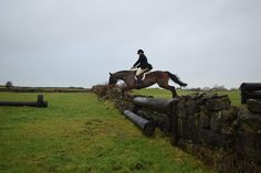 Romeo hunting Dec 2019. #loveirishhorses #horsesinireland #horseforsale Horses For Sale, The Locals, Over The Years, Irish, Ireland, Hunting, Irish People, Deer Hunting, Irish Language
