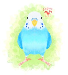 budgie  FACEBOOK PAGE https://www.facebook.com/mamelurihakotori Thank you for seeing. Like us on Facebook now!