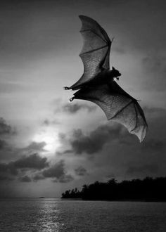 I love bats. Why am I OBSESSED with animals that carry rabies? I don't know. Just one of those crazy things about me.