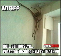 O OMG that just gave me cold chills, looks like a spider, I would NEVER return to the place I seen that. I have goose bumps all over lol Funny Quotes, Funny Memes, Hilarious, Jokes, Oh Hell No, Laugh Out Loud, The Funny, I Laughed, Scary