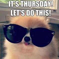 Weekend Quotes : The weekend is here. Lets roll baby! + sunglasses - Quotes Sayings Funny Thursday Quotes, Thursday Meme, Happy Weekend Quotes, Thankful Thursday, Funny Quotes, Happy Friday, Saturday Quotes, Funny Memes, Dog Quotes