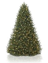 Balsam Fir Christmas Trees - Balsam Hill - voted best and has Good Housekeeping seal