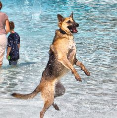 Dog Water Day at the Lake Erie Metropark. I liked this dog. She kept jumping nonstop :)