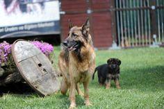 klea von mesina  and klea puppy
