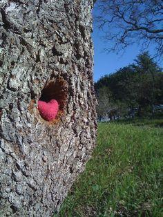 A little love for an old oak near my workplace. #yarnbomb #knitting