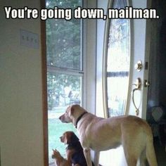 This is soooo true!!  Dogs hate the mail delivery person!!  Don't understand it. Mine hates UPS - but not FedEx - go figure