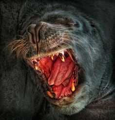 ♥ South American sea lion. Valencia, February 8, 2012. Photo by Ger Art