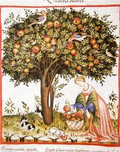 "jeannepompadour: "" Tacuinum Sanitatis, Italian School, 1370-1400 """