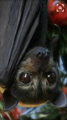 Um' this is a bat, bat's are very creepy but this a cute creepy bat:) – Animal Kingdom Nature Animals, Animals And Pets, Baby Animals, Funny Animals, Cute Animals, Wild Animals, Cute Creatures, Beautiful Creatures, Animals Beautiful