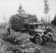 Real Christmas Tree Growers Celebrate Holiday Traditions of Revelers and Family Growers Real Christmas Tree, Old Fashioned Christmas, Christmas Past, Merry Little Christmas, Xmas Tree, Christmas Holidays, Christmas Decorations, Christmas Cards, Vintage Christmas Photos