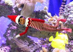 Zofie the elf dives with the fish at Life in the Water. #tulsazoo