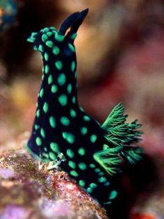 Sea slug. This little guy looks like the Sponge Bob version of My Little Pony! Little cutie!