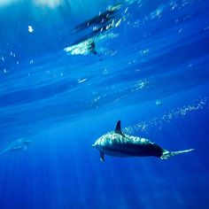 Spinner dolphin in Kauai- thank you #captainandyssailingadventures for the trip. @gopro hero 4 black  3 way extension arm waterproof case.