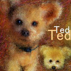PCペイントで絵を描きました! Art picture by Seizi.N:   以前にpickのお友達犬をお絵描きした時、もう一枚描いた絵ですこんな感じにコラージュした作品はお絵描きだから出来ますね、記念の作品になればイイです。  今日は僕のfacebookのお友達の歌を紹介します、FBでミュージシャンやアーチストや有名スターの方々と僕の絵の繋がりで、たくさんの友達が出来ました、その中の何人かの歌を紹介していきます。 Samuel Barber: Relaxing Grass In the Wind http://youtu.be/8-yuSNYns9M  僕のブログでも見れます。 http://nodasanta.blogspot.jp/