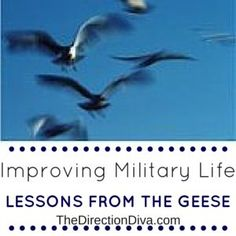 Take a lesson from the geese and learn a simple strategy on how to improve your life in this blog post!