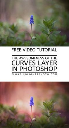 The Awesomeness of the Curves Adjustment Layer in Photoshop More #photoshop #editing