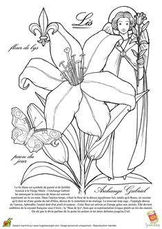 fleur de lys ou lis