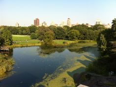 Central Park - Great Lawn in New York, NY