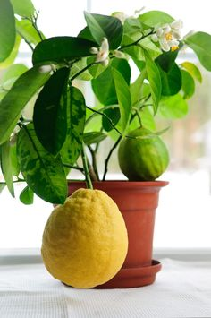 The Advantages Of Growing Food Indoors With Hydroponic Gardening Home Hydroponics, Hydroponic Farming, Hydroponic Growing, Growing Plants, Growing Vegetables, Gardening Vegetables, Herb Garden, Garden Plants, Indoor Plants