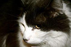 Bubba, via Flickr.