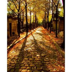 All Things Autumn ❤ liked on Polyvore
