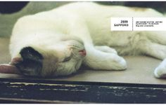 2009 in SAPPORO 고냥이.