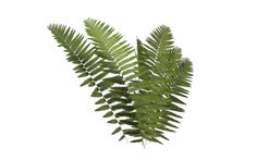 Fern 04 by wolverine041269
