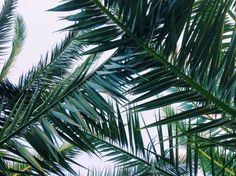 green, lovely, palm, plant, plants