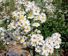 daisies everywhere! @Tasha Wilson