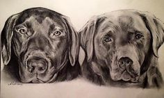 A3 pencil portrait of two Labradors, Ruby and Eric | Alex Martin Art