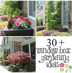 Kaila's Place | 30+ Window Boxes