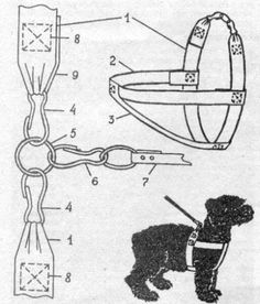 Dog Coat pattern Dog clothes patterns for sewing Small dog clothes pattern Dog Jacket Sewing pattern PDF Dog clothes PDF Pattern for XS dog Dog Harness, Dog Leash, Small Dog Clothes Patterns, Dog Coat Pattern, Diy Dog Collar, Dog Furniture, Pet Clothes, Dog Clothing, Dog Jacket