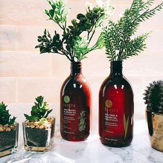 """""""To plant a garden, is to believe in tomorrow."""" - Audrey Hepburn #luseta #lusetabeauty #lusetalifestyle . . . #qotd #quoteoftheday #plants #haircare #hair #beauty #hairproducts #teatree #shampoo #conditioner #creative #saturday  #Regram via @lusetabeauty"""