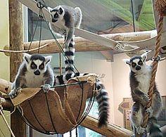 Primate Environmental Enrichment - hanging