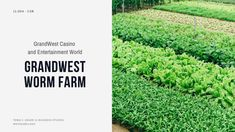 Read about GrandWest Casino and Entertainment World's Worm Farm to get a better understanding of CSR (Corporate Social Responsibility). This is a real-life example of sustainable business. Instead of sending kitchen waste to landfills, where it can take over 30 years to decompose, GrandWest has found a more eco-friendly and cost-efficient solution. The worm farm turns the waste into organic compost, which feeds their on-site vegetable garden and indigenous nursery.