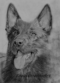 """""""Spike"""" german shepherd pencil drawing on 24x30  https://www.facebook.com/BrauckmannsART"""