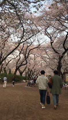 Seoul Korea Travel, Tokyo Japan Travel, South Korea Seoul, Go To Japan, Aesthetic Japan, Japanese Aesthetic, City Aesthetic, Aesthetic Videos, Japon Tokyo