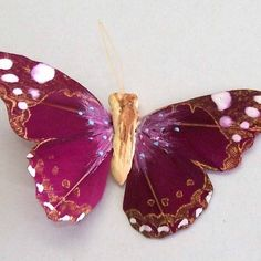 Craft Online, Creative Crafts, Paradise, Feather, Africa, Butterfly, Scrapbook, Detail, Animals