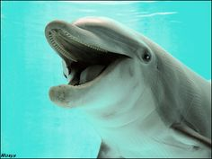 Dolphin - eating YOOOOU by *woxys on deviantART