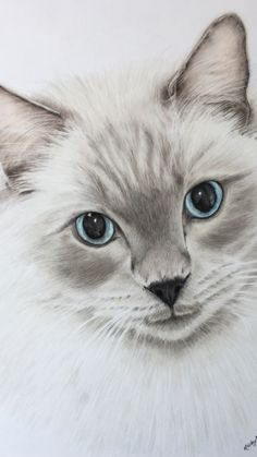 Absolutely loved drawing this gorgeous chap. Cat drawing created with coloured pencils on drafting film. Portrait Art, Pet Portraits, Colorful Animals, Cute Animals, Animal Drawings, Pencil Drawings, Funny Girls, Coloured Pencils, Blue Wallpapers