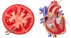 Minden növény nyersen fogyasztva arra a szervre jó, azt a szervet gyógyítja, amelyikre hasonlít! A gombák különleges élőlények, se...