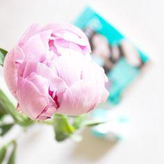 """218 tykkäystä, 14 kommenttia - Silvia (@dettaglidisilvia) Instagramissa: """"Buon pomeriggio ragazze  Una peonia per voi  Pomeriggio di relax tra video, foto e libri…"""""""
