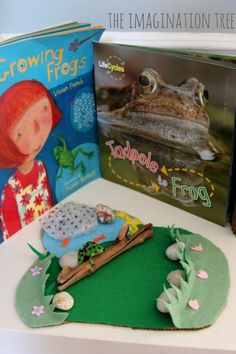 Frog life cycle investigation area