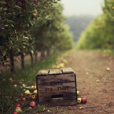Apple harvest|cM